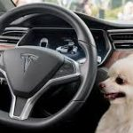 Tesla's Next Over-The-Air Update Will Bring All New Dog Mode And Sentry Mode